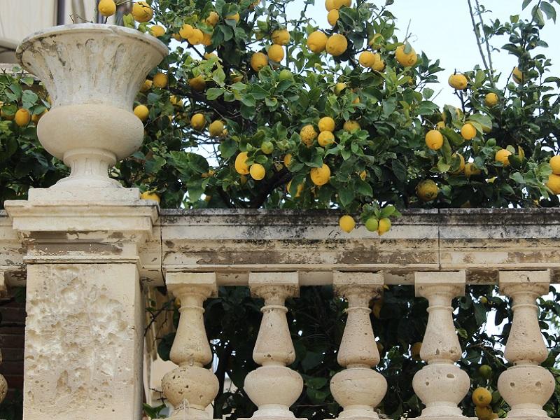 Limone 6