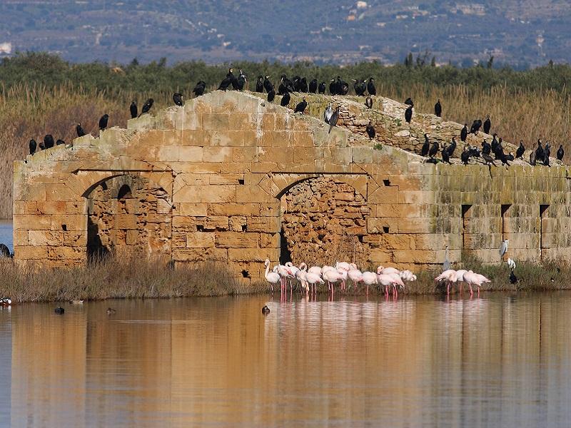 Casa del Salinaio Vendicari Si riconoscono Fenicotteri e Cormorani